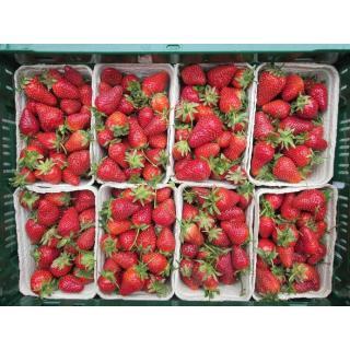 Erdbeeren aus Deutschland 250g