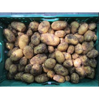 "Frühkartoffeln ""Anabelle"", festkochend"