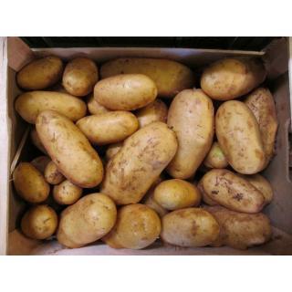 Frühkartoffeln Spunta  -NEUE SORTE-
