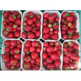 Erdbeeren  500g-Schälchen Ersatzartikel