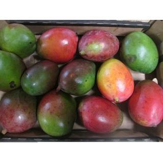 """Mangos Sorte """"Keitt"""""""