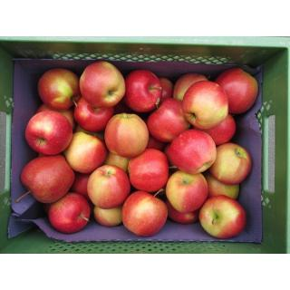 Apfel Marnica / Augustin