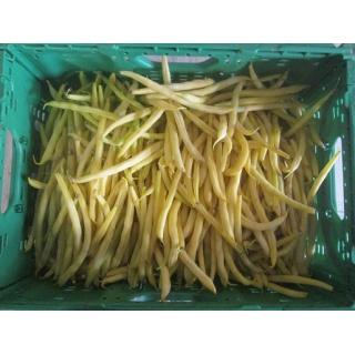 Wachsbohnen / gelbe Buschbohnen