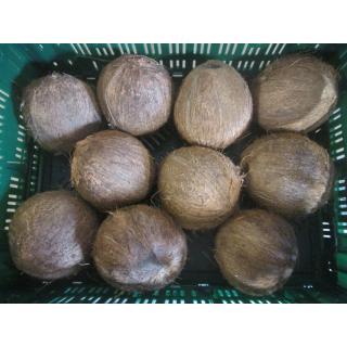 Kokosnüsse, frisch