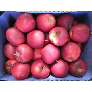 Apfel Red Jonaprince