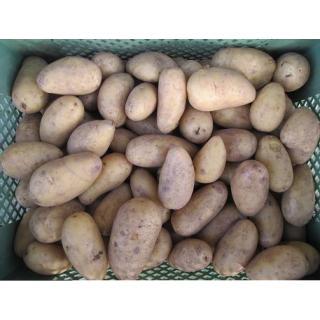 Frühkartoffel Anabelle fk