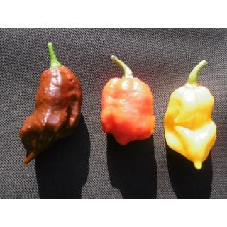 Chilivariation 3 Stück, sehr sehr scharf