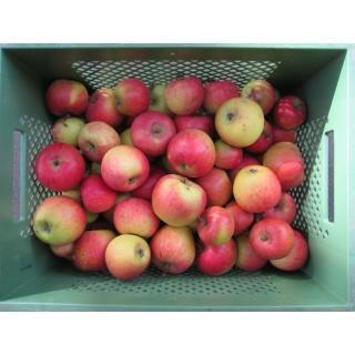 """Apfel """"Goldparmäne"""""""