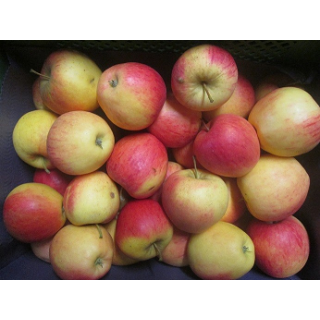 "Apfel ""Pinova"""