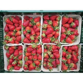 Erdbeeren 250g Italien