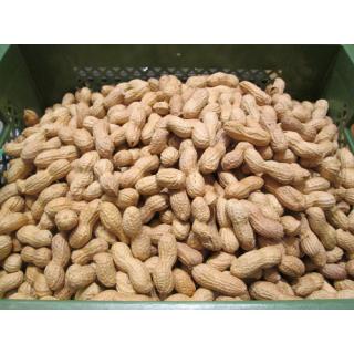 Erdnüsse i.d. Schale, geröstet